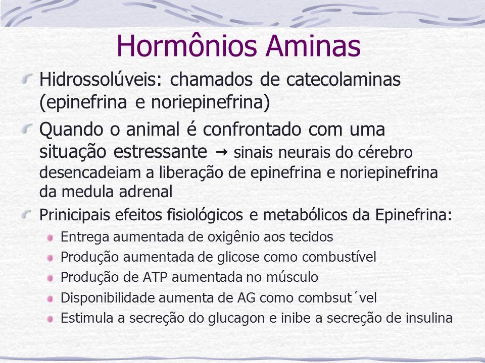 Hormônios Aminas Hidrossolúveis: chamados de catecolaminas (epinefrina e noriepinefrina) Quando o animal é confrontado com uma situação estressante  sinais neurais do cérebro desencadeiam a liberação de epinefrina e noriepinefrina da medula adrenal Prinicipais efeitos fisiológicos e metabólicos da Epinefrina: Entrega aumentada de oxigênio aos tecidos Produção aumentada de glicose como combustível Produção de ATP aumentada no músculo Disponibilidade aumenta de AG como combsut´vel Estimula a secreção do glucagon e inibe a secreção de insulina