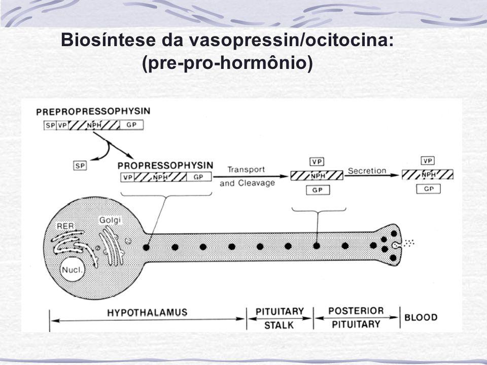 Biosíntese da vasopressin/ocitocina: (pre-pro-hormônio)