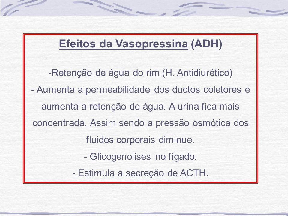 Efeitos da Vasopressina (ADH) -Retenção de água do rim (H. Antidiurético) - Aumenta a permeabilidade dos ductos coletores e aumenta a retenção de água