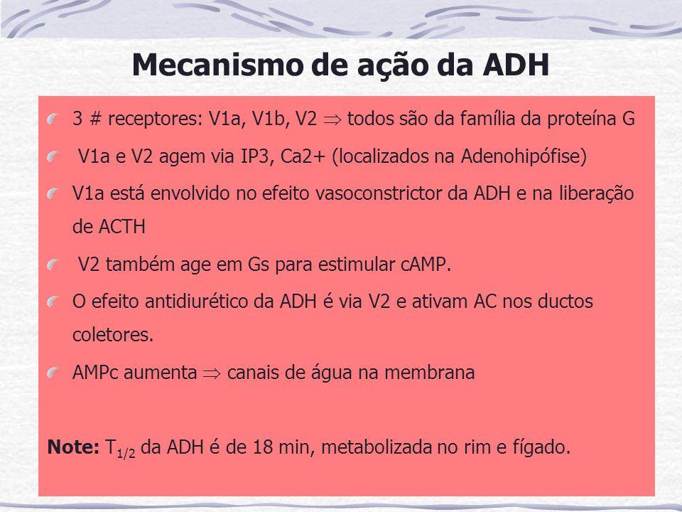 Mecanismo de ação da ADH 3 # receptores: V1a, V1b, V2  todos são da família da proteína G V1a e V2 agem via IP3, Ca2+ (localizados na Adenohipófise) V1a está envolvido no efeito vasoconstrictor da ADH e na liberação de ACTH V2 também age em Gs para estimular cAMP.
