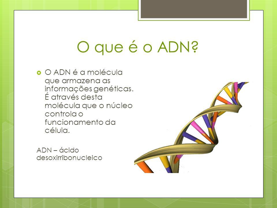 Como é constituído o ADN.