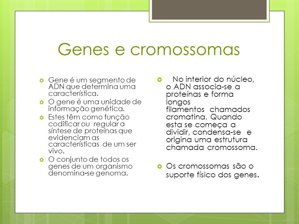 Mecanismo de transmissão de caracteres hereditários  Foi Gregor Mendel, quem conclui que as características de cada ser vivo, se devem á existência de um par de fatores , que os descendentes recebem dos seus progenitores.