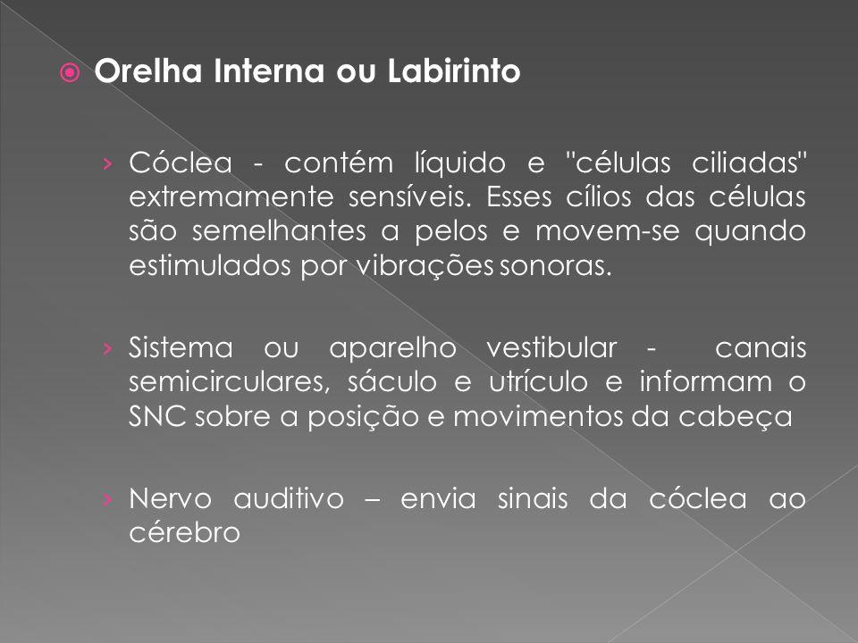  Orelha Interna ou Labirinto › Cóclea - contém líquido e