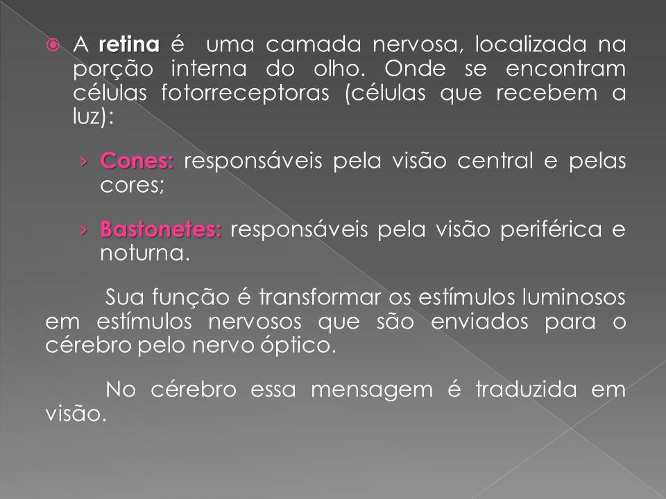 retina  A retina é uma camada nervosa, localizada na porção interna do olho. Onde se encontram células fotorreceptoras (células que recebem a luz): ›