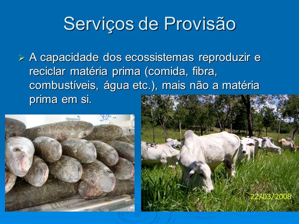 Serviços de Provisão  A capacidade dos ecossistemas reproduzir e reciclar matéria prima (comida, fibra, combustíveis, água etc.), mais não a matéria