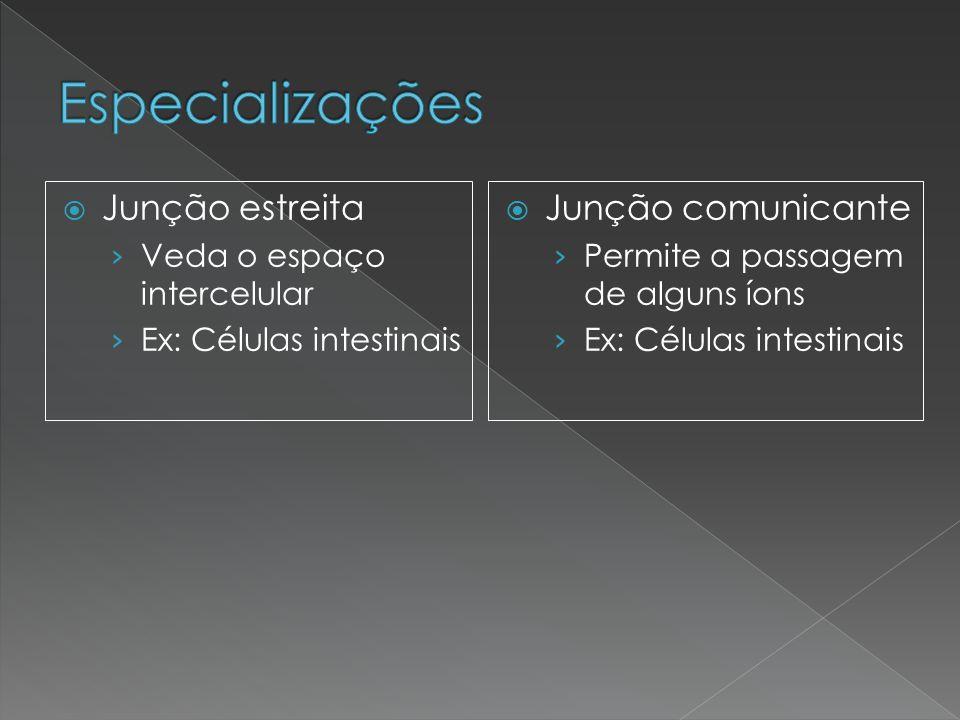  Junção estreita › Veda o espaço intercelular › Ex: Células intestinais  Junção comunicante › Permite a passagem de alguns íons › Ex: Células intest