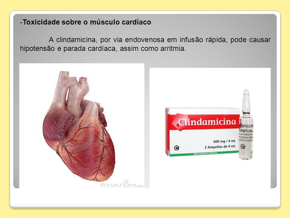 -Toxicidade sobre o músculo cardíaco A clindamicina, por via endovenosa em infusão rápida, pode causar hipotensão e parada cardíaca, assim como arritm