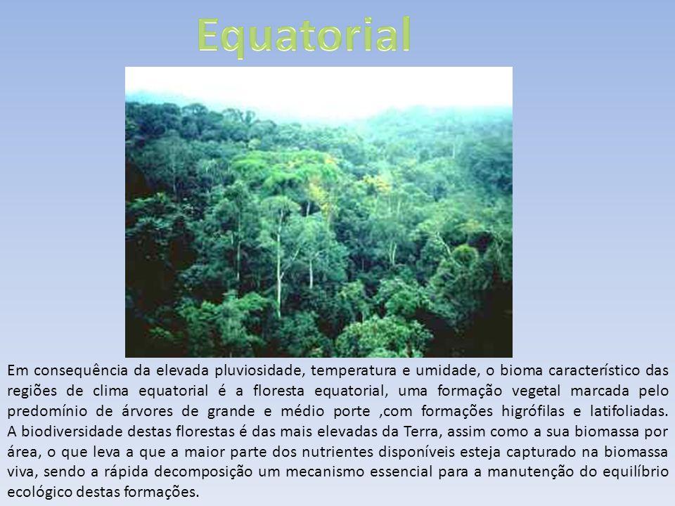 Em consequência da elevada pluviosidade, temperatura e umidade, o bioma característico das regiões de clima equatorial é a floresta equatorial, uma fo