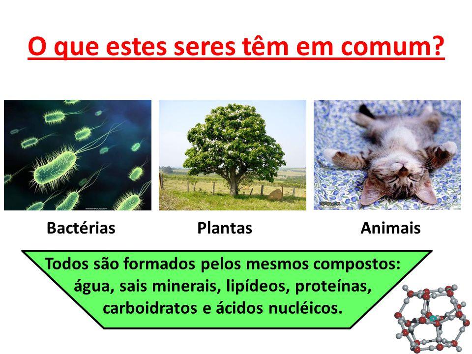 O que estes seres têm em comum? BactériasPlantasAnimais Todos são formados pelos mesmos compostos: água, sais minerais, lipídeos, proteínas, carboidra