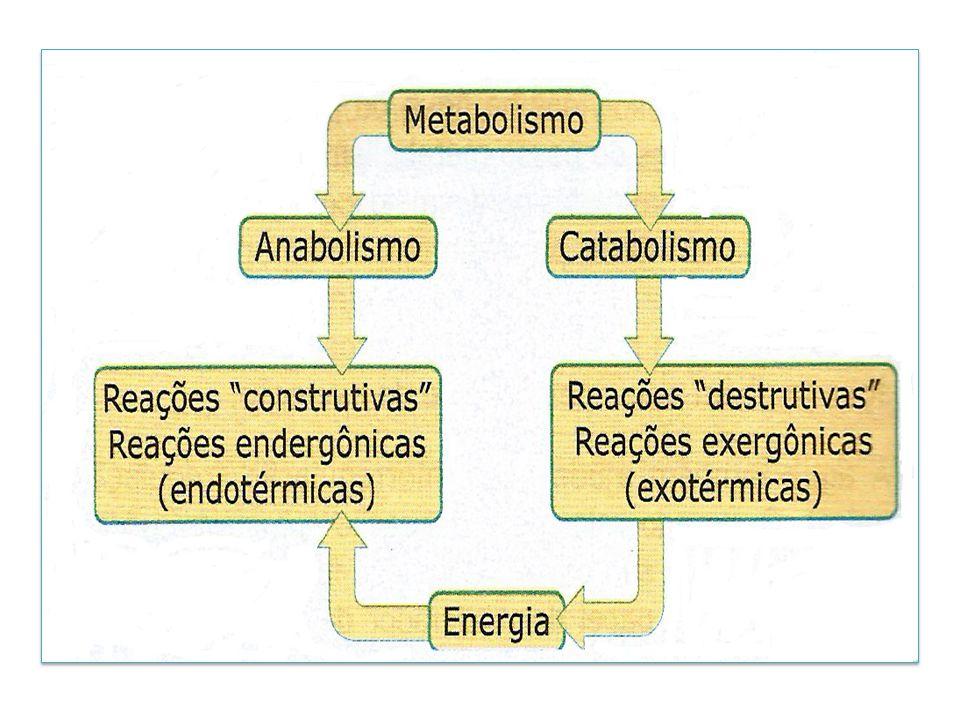 Obtenção de minerais pelos seres vivos Vegetais e microorganismos: absorção de íons do ambiente Animais: através da ingestão de alimentos e água