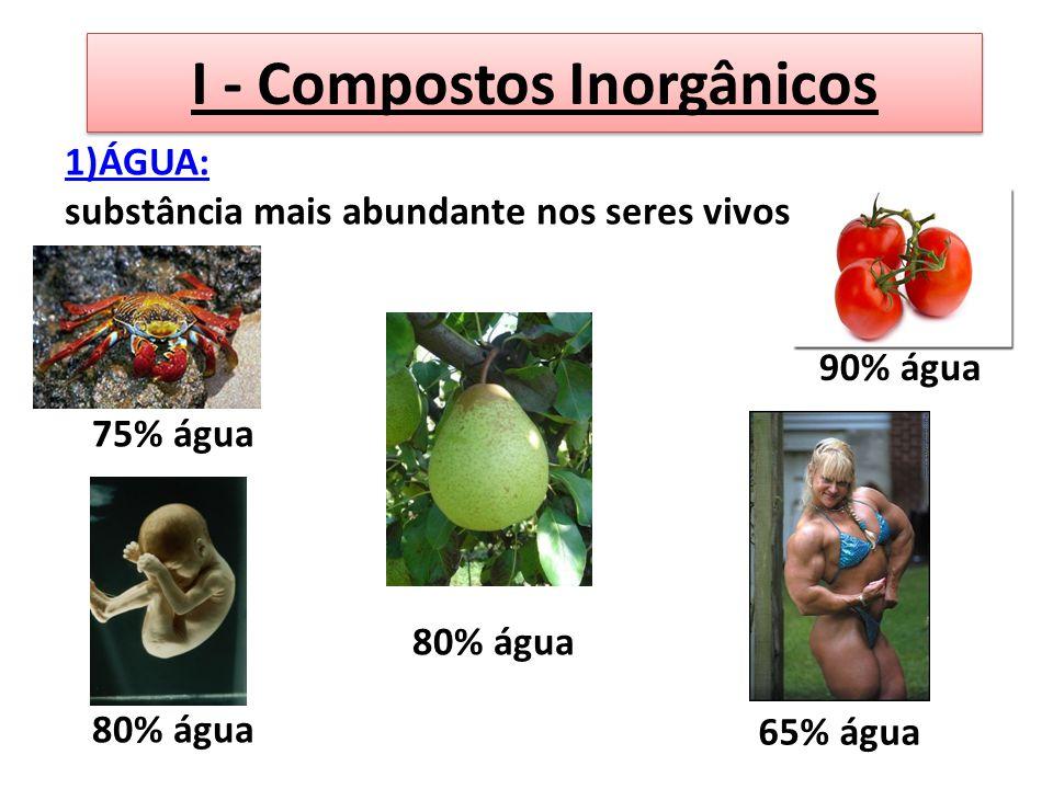 I - Compostos Inorgânicos 1)ÁGUA: substância mais abundante nos seres vivos. 75% água 80% água 90% água 80% água 65% água