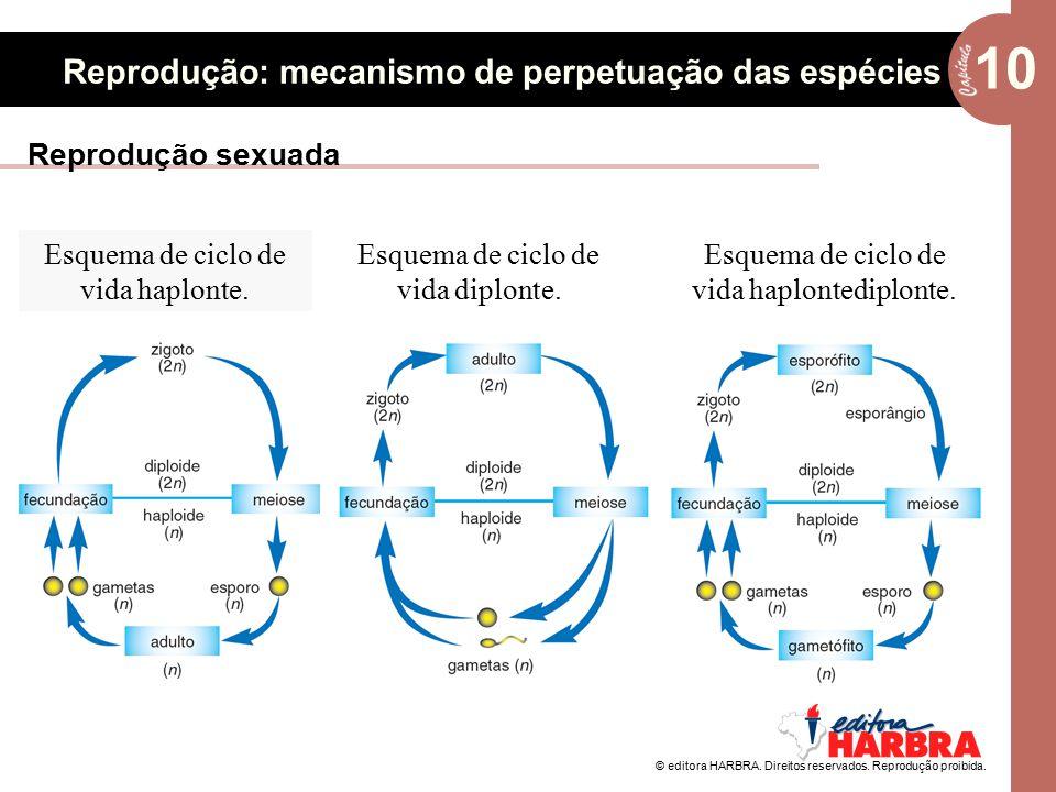 © editora HARBRA. Direitos reservados. Reprodução proibida. 10 Reprodução: mecanismo de perpetuação das espécies Esquema de ciclo de vida haplonte. Es