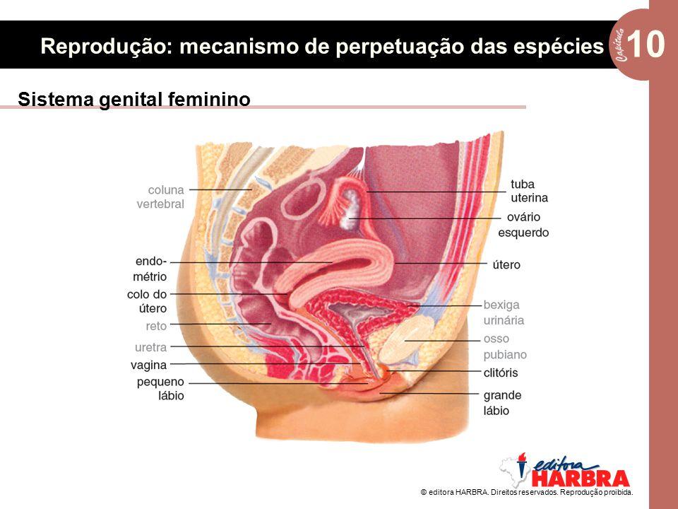 © editora HARBRA. Direitos reservados. Reprodução proibida. 10 Reprodução: mecanismo de perpetuação das espécies Sistema genital feminino