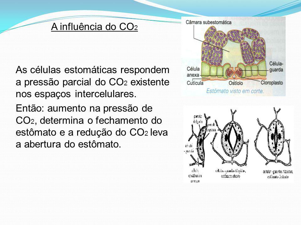 A influência do CO 2 As células estomáticas respondem a pressão parcial do CO 2 existente nos espaços intercelulares. Então: aumento na pressão de CO