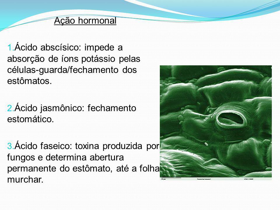 Ação hormonal 1. Ácido abscísico: impede a absorção de íons potássio pelas células-guarda/fechamento dos estômatos. 2. Ácido jasmônico: fechamento est