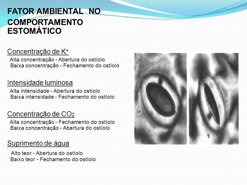 FATOR AMBIENTAL NO COMPORTAMENTO ESTOMÁTICO Concentração de K + Alta concentração - Abertura do ostíolo Baixa concentração - Fechamento do ostíolo Int