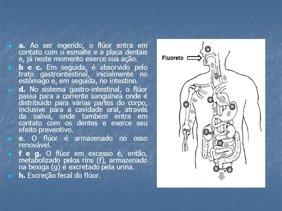 a. Ao ser ingerido, o flúor entra em contato com o esmalte e a placa dentais e, já neste momento exerce sua ação. b e c. Em seguida, é absorvido pelo