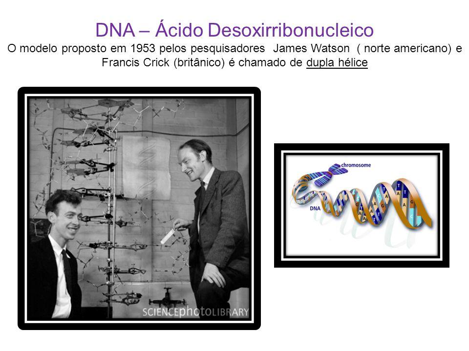 DNA – Ácido Desoxirribonucleico O modelo proposto em 1953 pelos pesquisadores James Watson ( norte americano) e Francis Crick (britânico) é chamado de