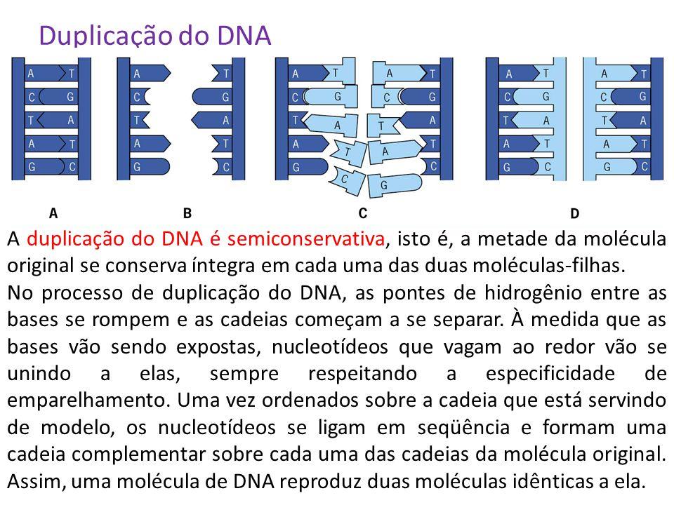 Duplicação do DNA A duplicação do DNA é semiconservativa, isto é, a metade da molécula original se conserva íntegra em cada uma das duas moléculas-fil