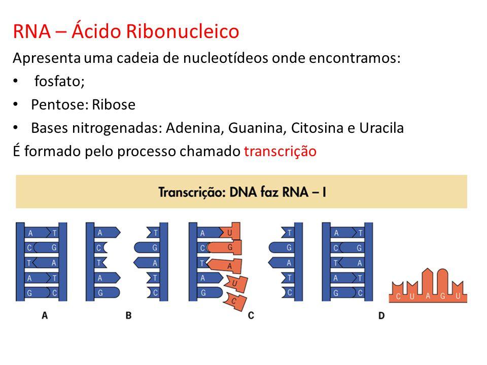 RNA – Ácido Ribonucleico Apresenta uma cadeia de nucleotídeos onde encontramos: fosfato; Pentose: Ribose Bases nitrogenadas: Adenina, Guanina, Citosin