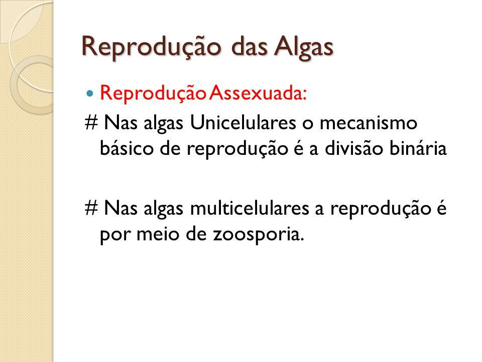 Reprodução das Algas Reprodução Assexuada: # Nas algas Unicelulares o mecanismo básico de reprodução é a divisão binária # Nas algas multicelulares a
