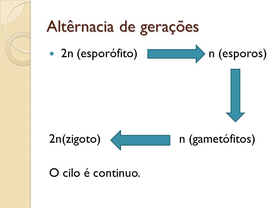 Altêrnacia de gerações 2n (esporófito) n (esporos) 2n(zigoto) n (gametófitos) O cilo é continuo.