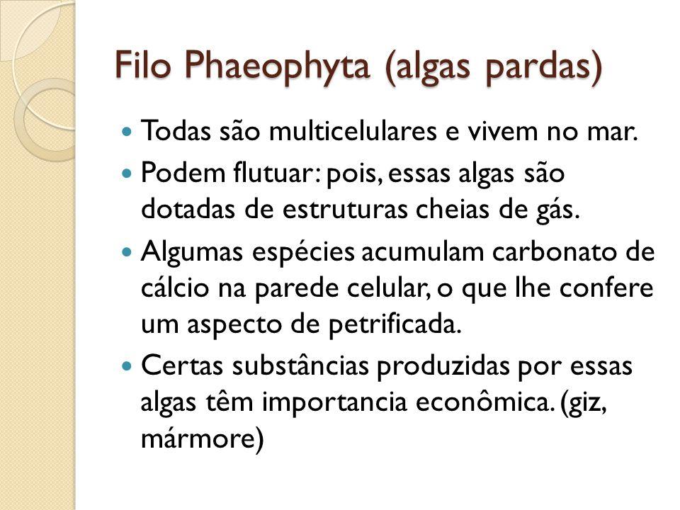 Filo Phaeophyta (algas pardas) Todas são multicelulares e vivem no mar. Podem flutuar: pois, essas algas são dotadas de estruturas cheias de gás. Algu