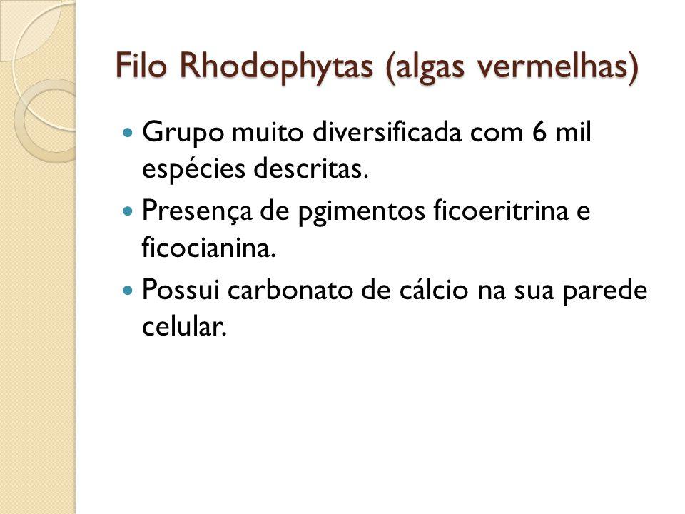 Filo Rhodophytas (algas vermelhas) Grupo muito diversificada com 6 mil espécies descritas. Presença de pgimentos ficoeritrina e ficocianina. Possui ca