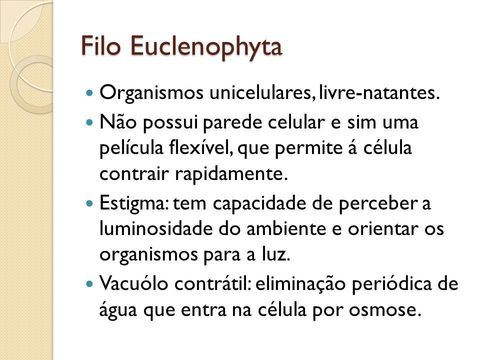 Filo Euclenophyta Organismos unicelulares, livre-natantes. Não possui parede celular e sim uma película flexível, que permite á célula contrair rapida