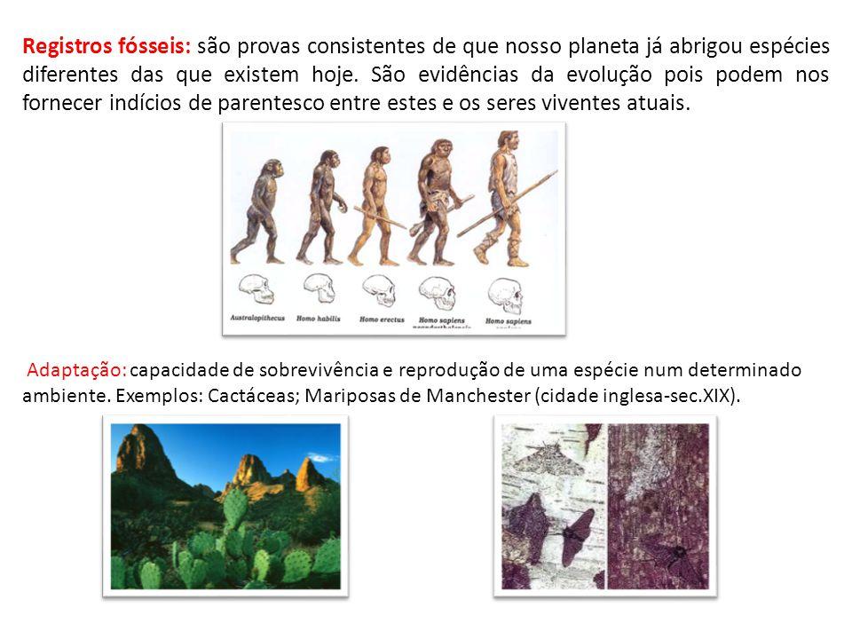 Registros fósseis: são provas consistentes de que nosso planeta já abrigou espécies diferentes das que existem hoje. São evidências da evolução pois p
