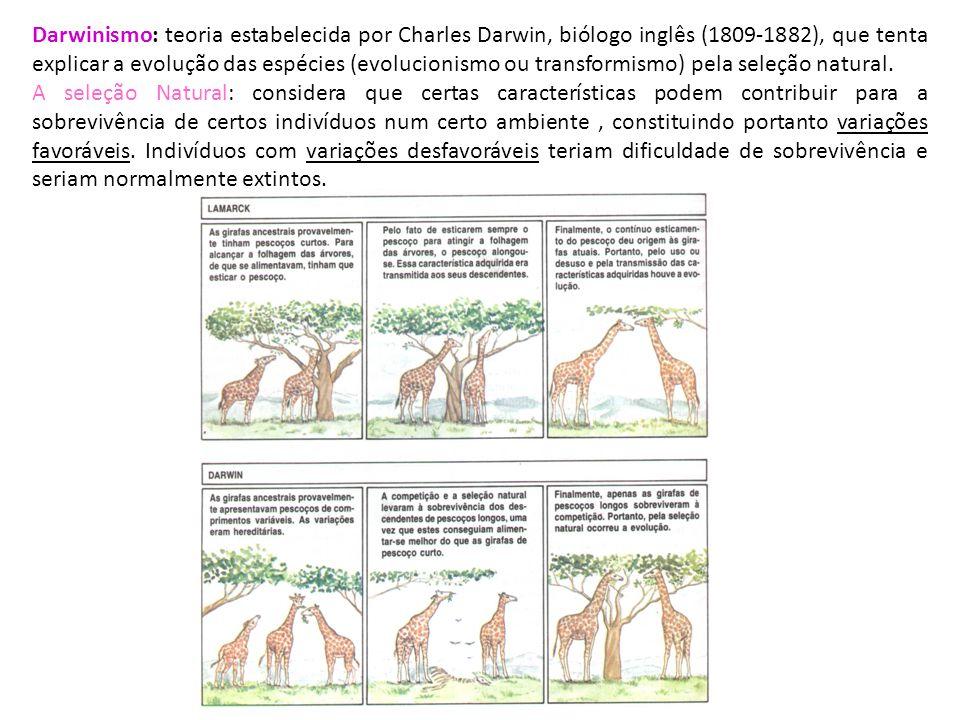 Darwinismo: teoria estabelecida por Charles Darwin, biólogo inglês (1809-1882), que tenta explicar a evolução das espécies (evolucionismo ou transform