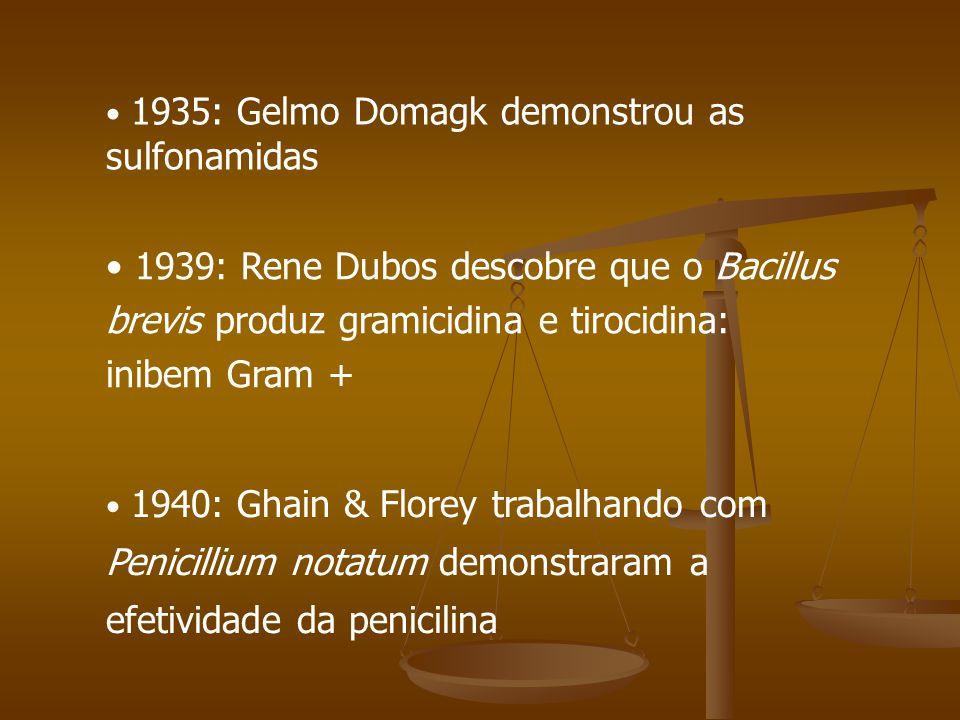 1940: Ghain & Florey trabalhando com Penicillium notatum demonstraram a efetividade da penicilina 1939: Rene Dubos descobre que o Bacillus brevis produz gramicidina e tirocidina: inibem Gram + 1935: Gelmo Domagk demonstrou as sulfonamidas