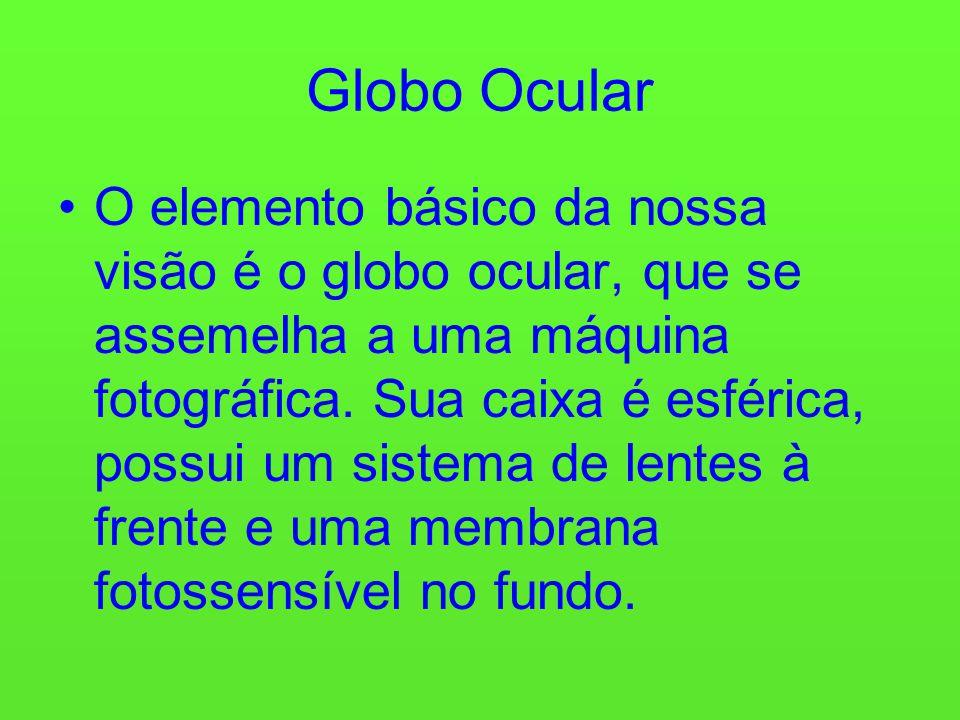 Globo Ocular O elemento básico da nossa visão é o globo ocular, que se assemelha a uma máquina fotográfica.