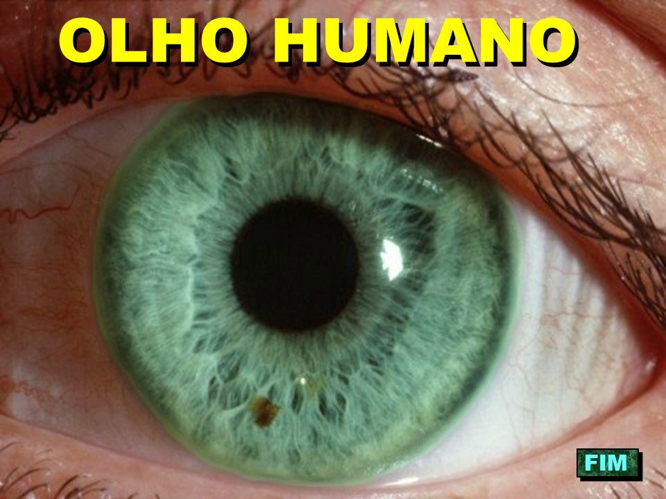 OLHO HUMANO FIM
