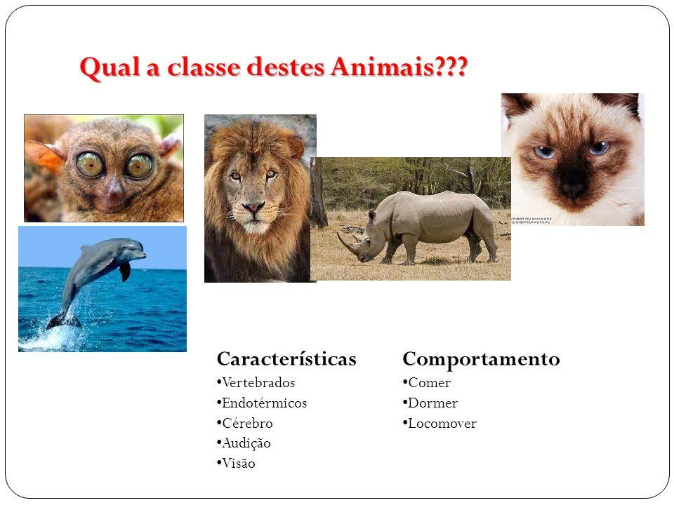 Qual a classe destes Animais??? Características Vertebrados Endotérmicos Cérebro Audição Visão Comportamento Comer Dormer Locomover