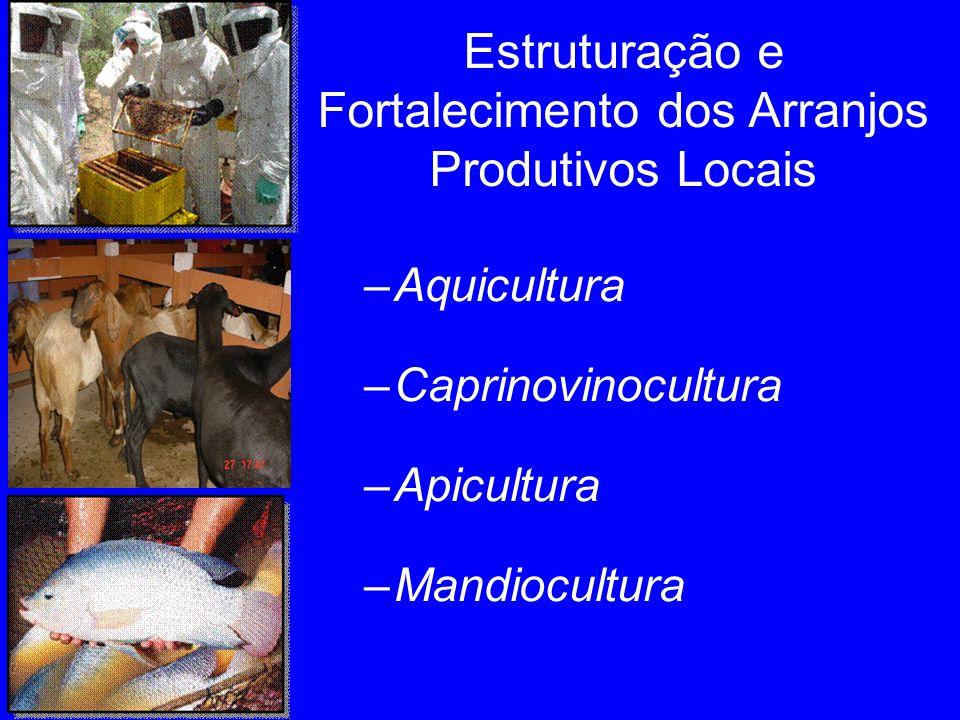 –Aquicultura –Caprinovinocultura –Apicultura –Mandiocultura Estruturação e Fortalecimento dos Arranjos Produtivos Locais