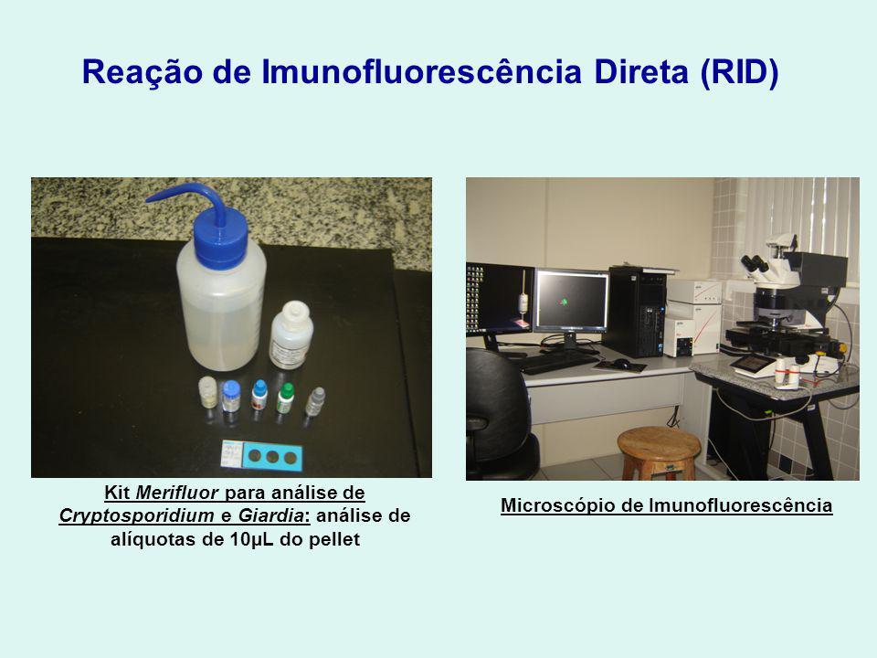 Reação de Imunofluorescência Direta (RID) Kit Merifluor para análise de Cryptosporidium e Giardia: análise de alíquotas de 10µL do pellet Microscópio de Imunofluorescência
