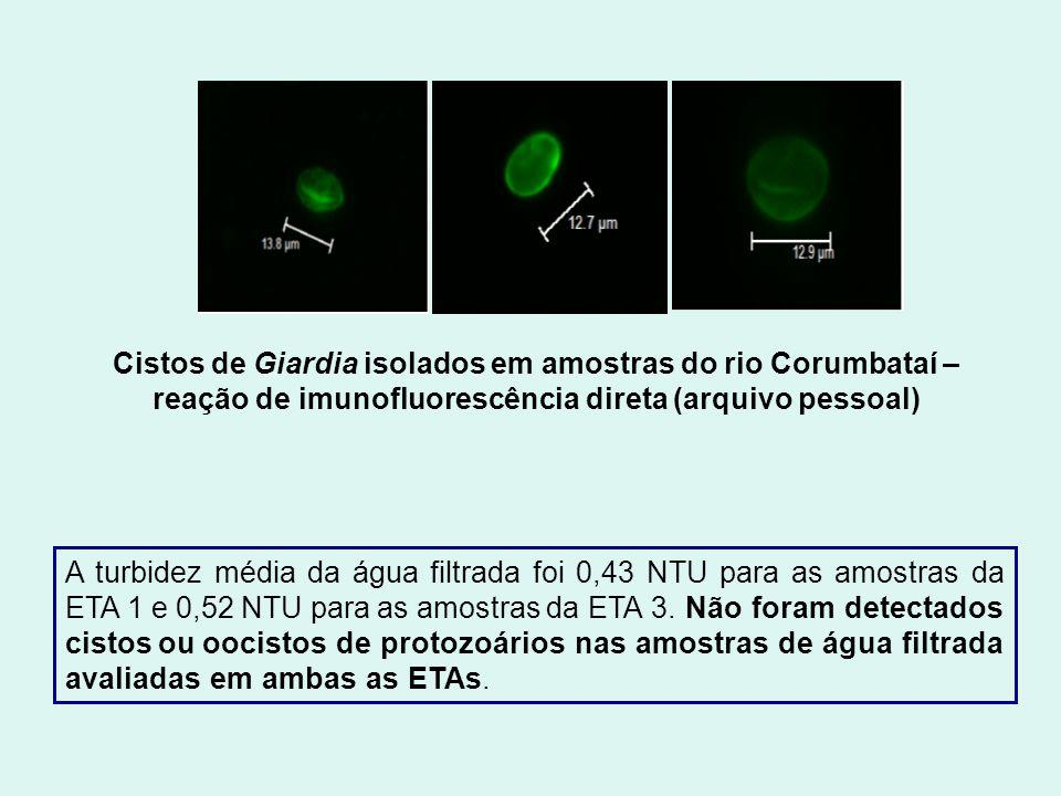 Cistos de Giardia isolados em amostras do rio Corumbataí – reação de imunofluorescência direta (arquivo pessoal) A turbidez média da água filtrada foi 0,43 NTU para as amostras da ETA 1 e 0,52 NTU para as amostras da ETA 3.