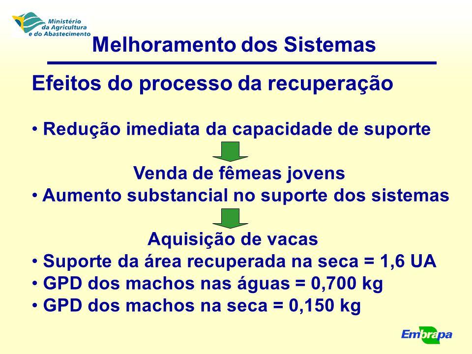 Melhoramento dos Sistemas Efeitos do processo da recuperação Redução imediata da capacidade de suporte Venda de fêmeas jovens Aumento substancial no s