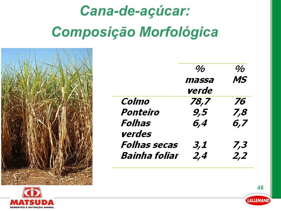 48 Cana-de-açúcar: Composição Morfológica