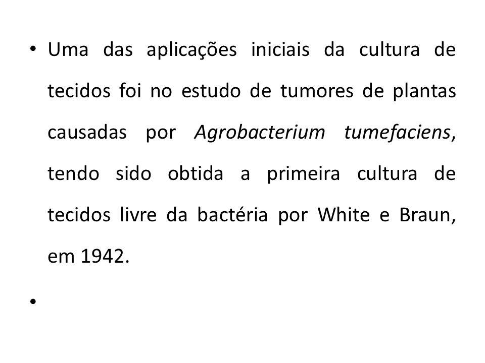 Uma das aplicações iniciais da cultura de tecidos foi no estudo de tumores de plantas causadas por Agrobacterium tumefaciens, tendo sido obtida a primeira cultura de tecidos livre da bactéria por White e Braun, em 1942.