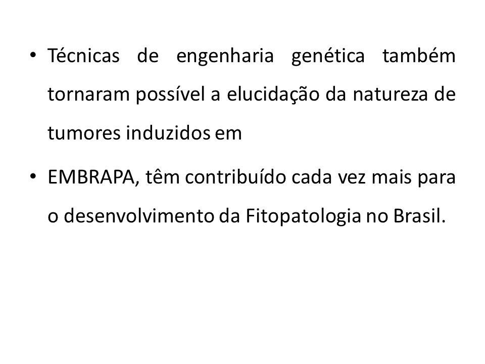 Técnicas de engenharia genética também tornaram possível a elucidação da natureza de tumores induzidos em EMBRAPA, têm contribuído cada vez mais para o desenvolvimento da Fitopatologia no Brasil.
