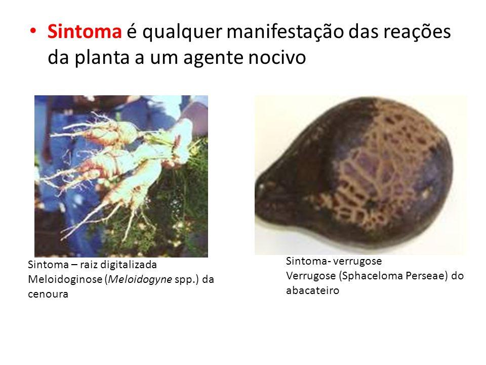 Sintoma é qualquer manifestação das reações da planta a um agente nocivo Sintoma – raiz digitalizada Meloidoginose (Meloidogyne spp.) da cenoura Sintoma- verrugose Verrugose (Sphaceloma Perseae) do abacateiro