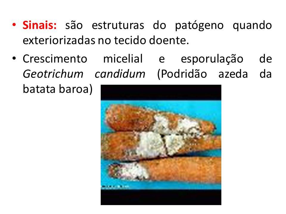 Sinais: são estruturas do patógeno quando exteriorizadas no tecido doente.