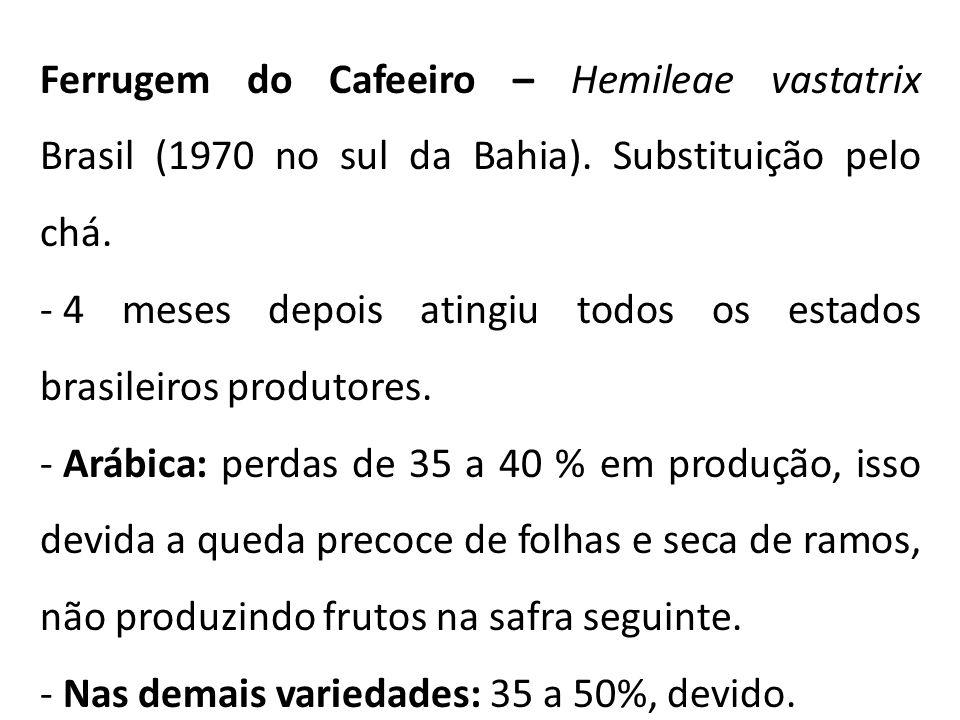 Ferrugem do Cafeeiro – Hemileae vastatrix Brasil (1970 no sul da Bahia).
