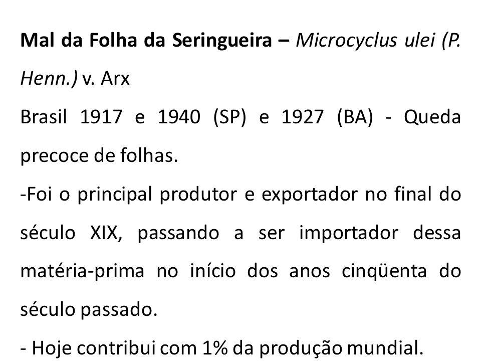 Mal da Folha da Seringueira – Microcyclus ulei (P.