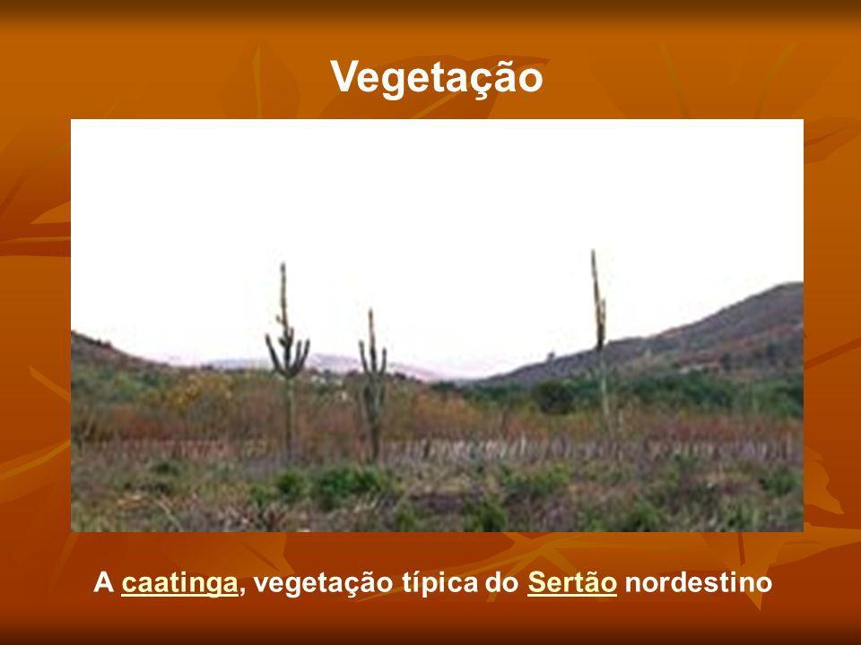 Vegetação A caatinga, vegetação típica do Sertão nordestinocaatingaSertão