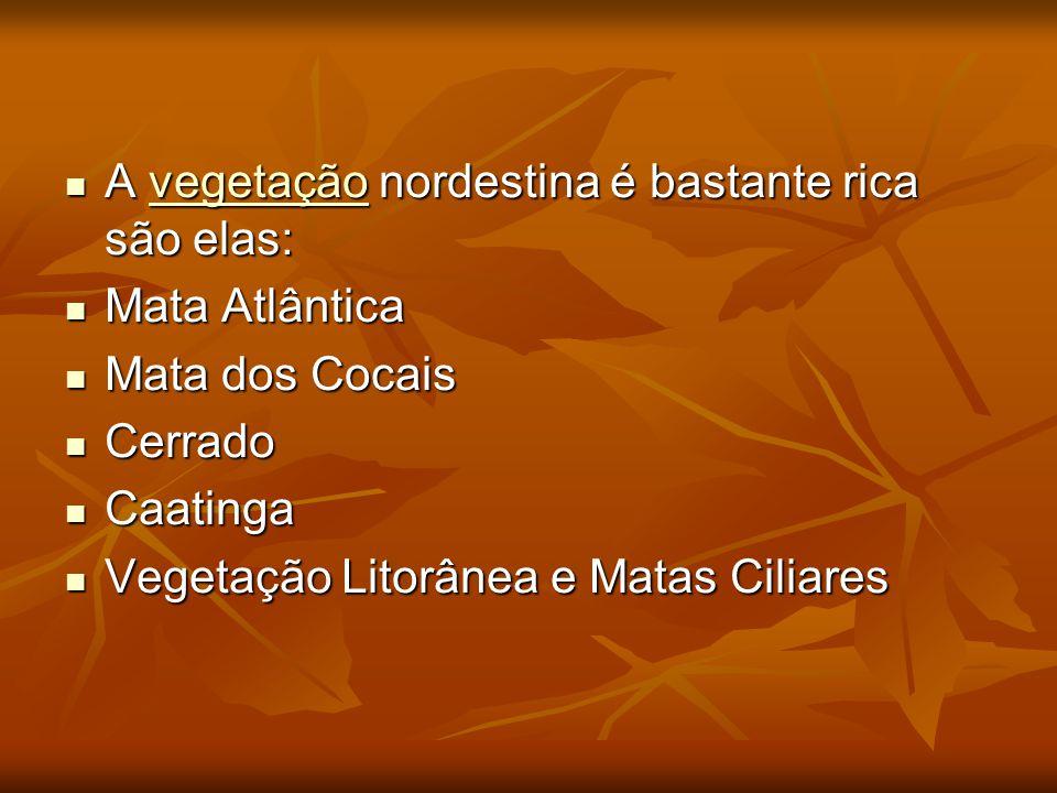 A vegetação nordestina é bastante rica são elas: A vegetação nordestina é bastante rica são elas:vegetação Mata Atlântica Mata Atlântica Mata dos Coca