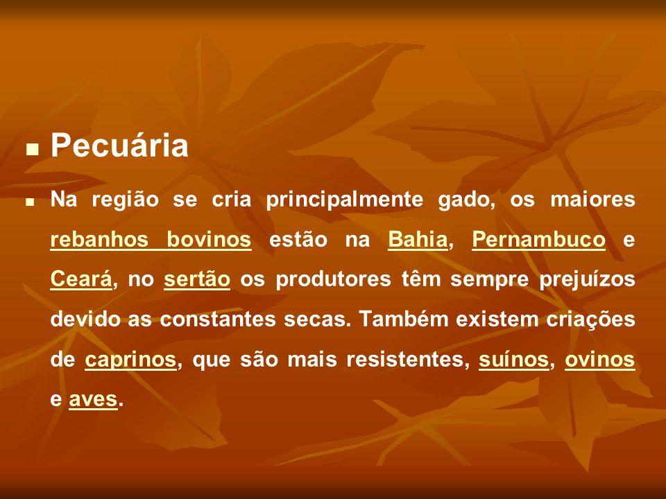 Pecuária Na região se cria principalmente gado, os maiores rebanhos bovinos estão na Bahia, Pernambuco e Ceará, no sertão os produtores têm sempre pre