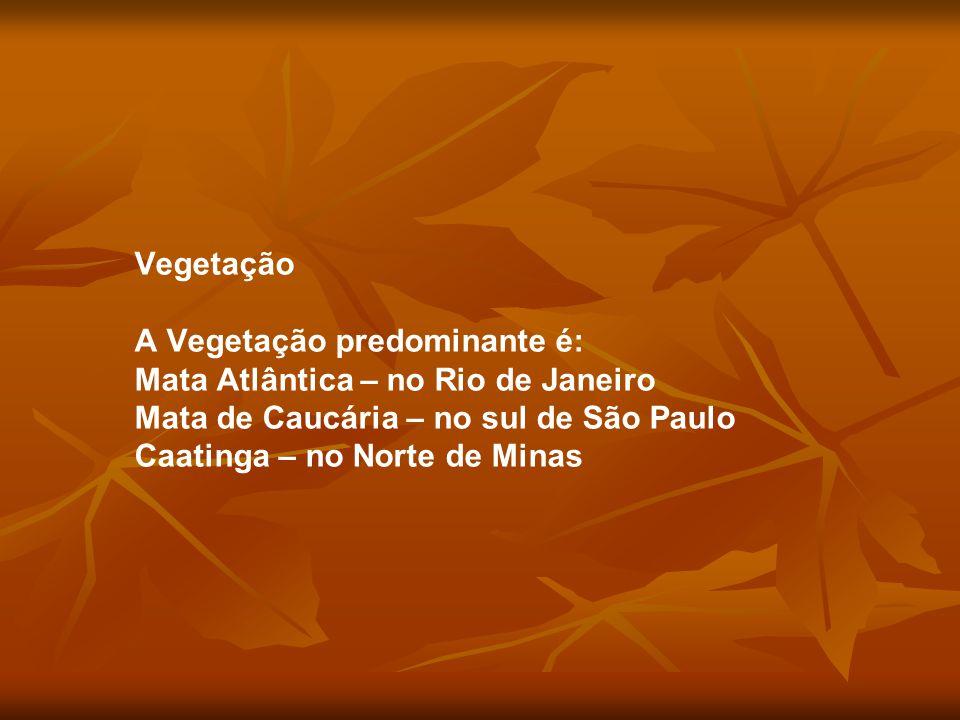 Vegetação A Vegetação predominante é: Mata Atlântica – no Rio de Janeiro Mata de Caucária – no sul de São Paulo Caatinga – no Norte de Minas